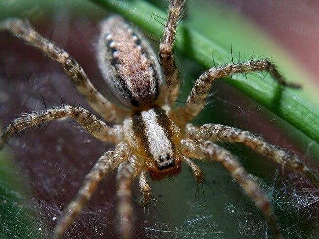 Credit: Jon Sullivan, www.public-domain-image.com