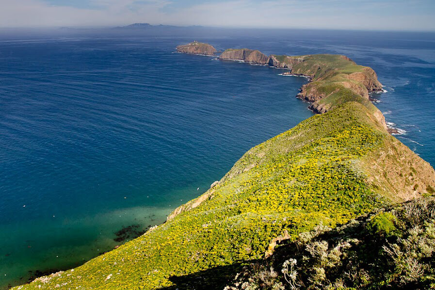 In 2001 and 2002, Island Conservation, the Channel Islands National Park, California Department of Fish and Game, the U.S. Fish and Wildlife Service, and the National Oceanic and Atmospheric Administration removed invasive rats from Anacapa Island to protect native wildlife. Photo courtesy of Abe Borker
