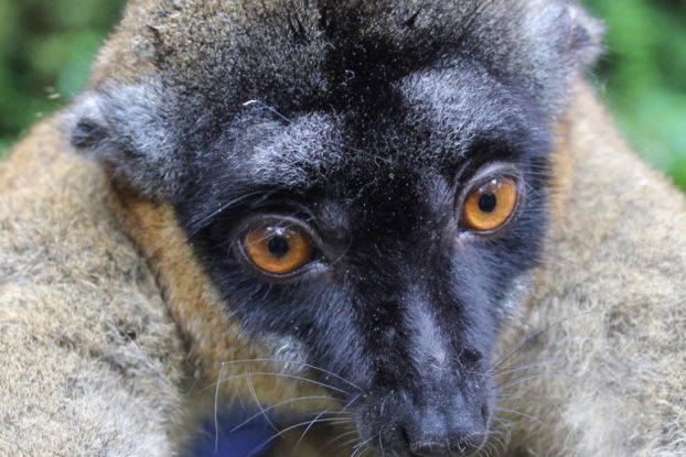 NIU anthropology professor Mitch Irwin is studying the diets of lemurs in Madagascar.